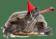 turtleversary